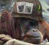Sgt.Squarehead