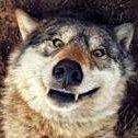 duskwolf